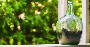 Che cos'è un Terrarium? - Glass Life Terrarium - Blog