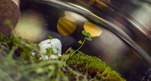 detail-xmas-terrarium-glasslife