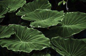 Piante e Benefici - 3 motivi per avere piante da interno 5