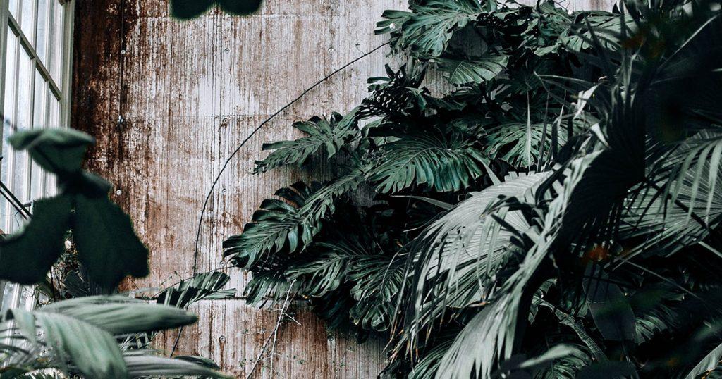 importanza-luce-piante-