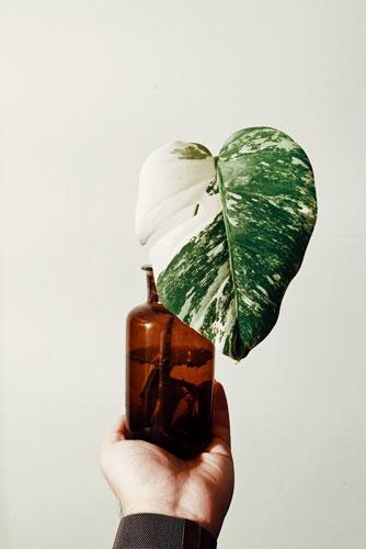 importanza-luce-piante-2