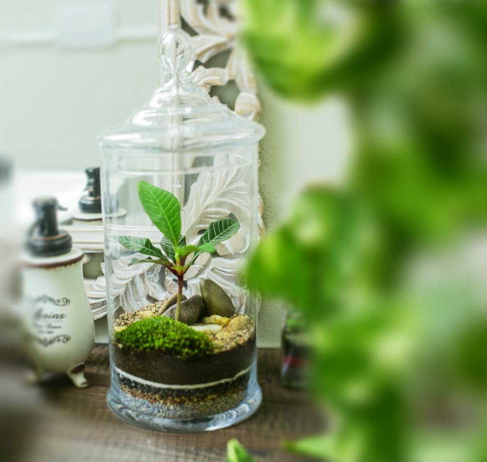 Terrarium-Glass-Life-35
