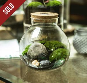 moss-TERRARIUM-GLASS-LIFE-prenotato