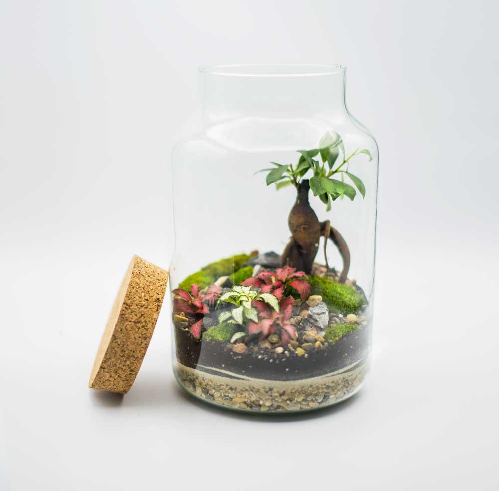 Terrarium-Glass-Life 43