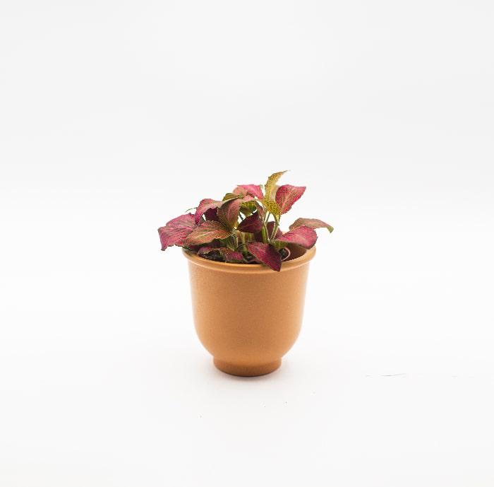 fittona-rossa-glass-life-terrarium-min