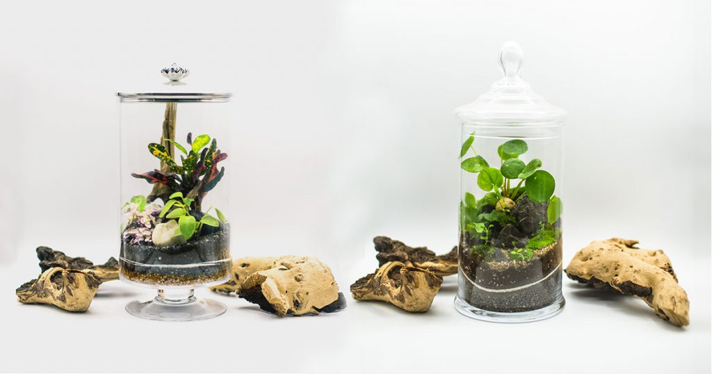 dove-comprare-un-terrarium-in-italia-glass-life