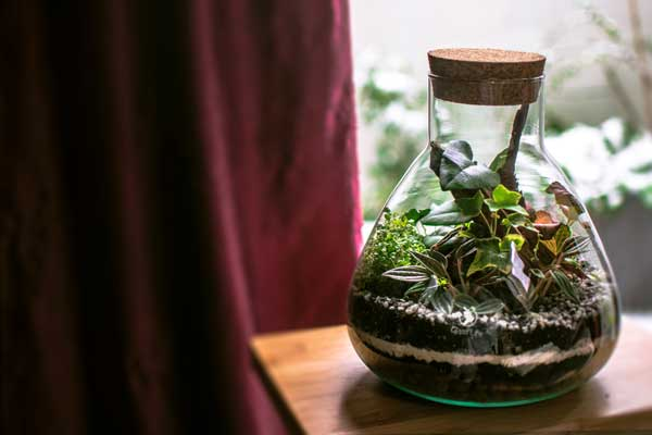 terrarium-glass-life-pronta-consegna