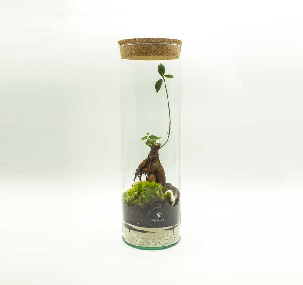 Terrarium-Glass-Life-48