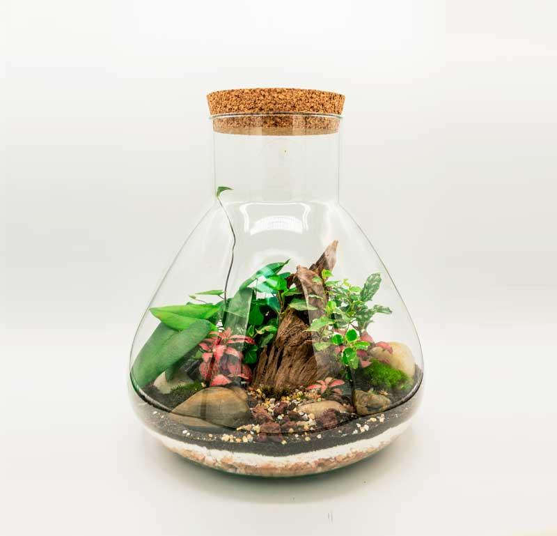 Terrarium Glass Life online disponibile grande giara piramide